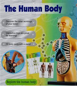 آناتومی کامل بدن 3303
